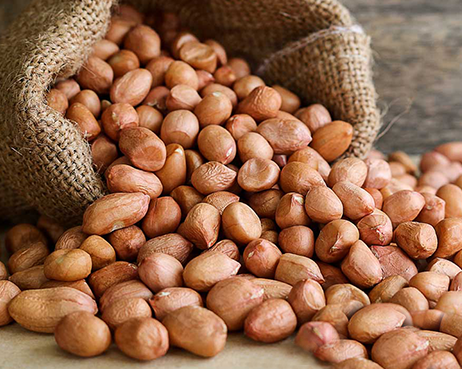 groundnut_seed_export
